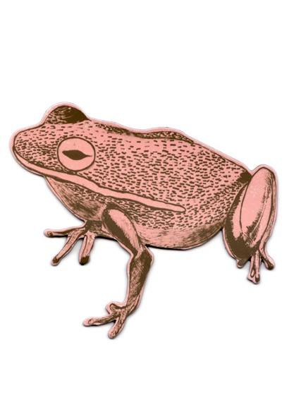 Magnet Frog von Sian Zeng - Pink