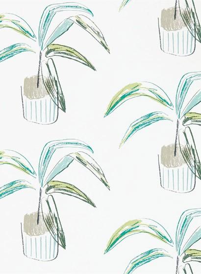 Topfpflanzen Tapete Crassula von Scion - Juniper/ Lime