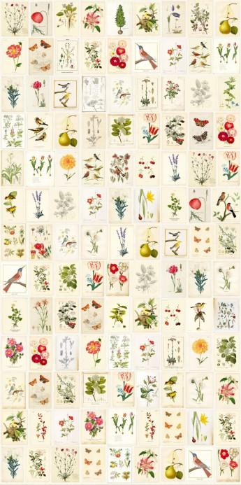 Collage-Wandbild Botanical Paper von Eijffinger